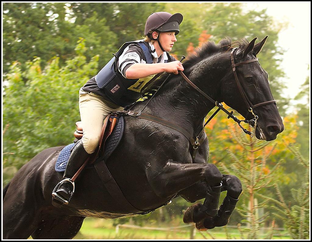 Black horses jumping - photo#3