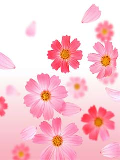 Flowers 240x320 Mobile Wallpapers 4