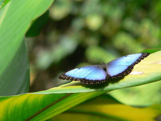 Imag Paisaje Animales Costa Rica_2