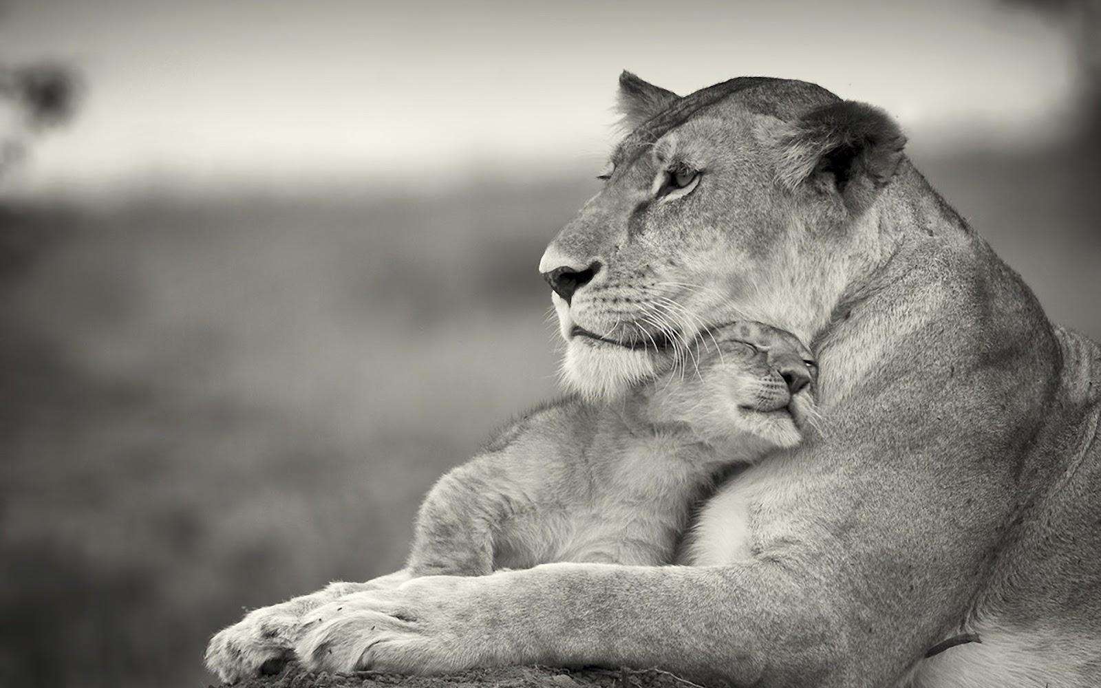 <b>Baby</b> Olifant Behang-Koop Goedkope <b>Baby</b> Olifant Behang loten van ...