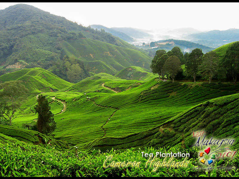 holiday at cameron highlands malaysia Cameron highlands big map going around on foot will be perfect during the holiday in cameron highlands direct hotel booking sites in malaysia cameron.