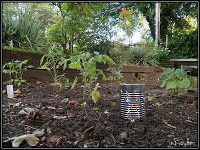 Planting Seeds in a Can #3
