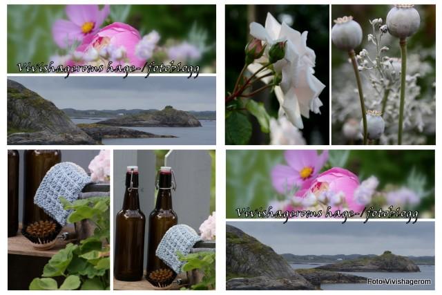 Vivishageroms hage og fotoblogg
