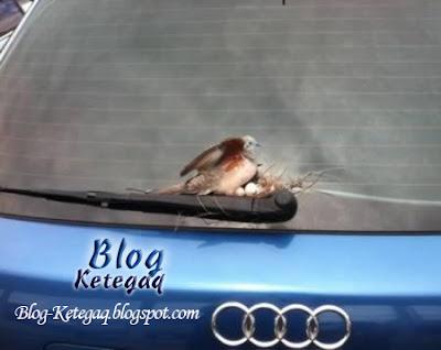 Burung bersarang tak kena tempat