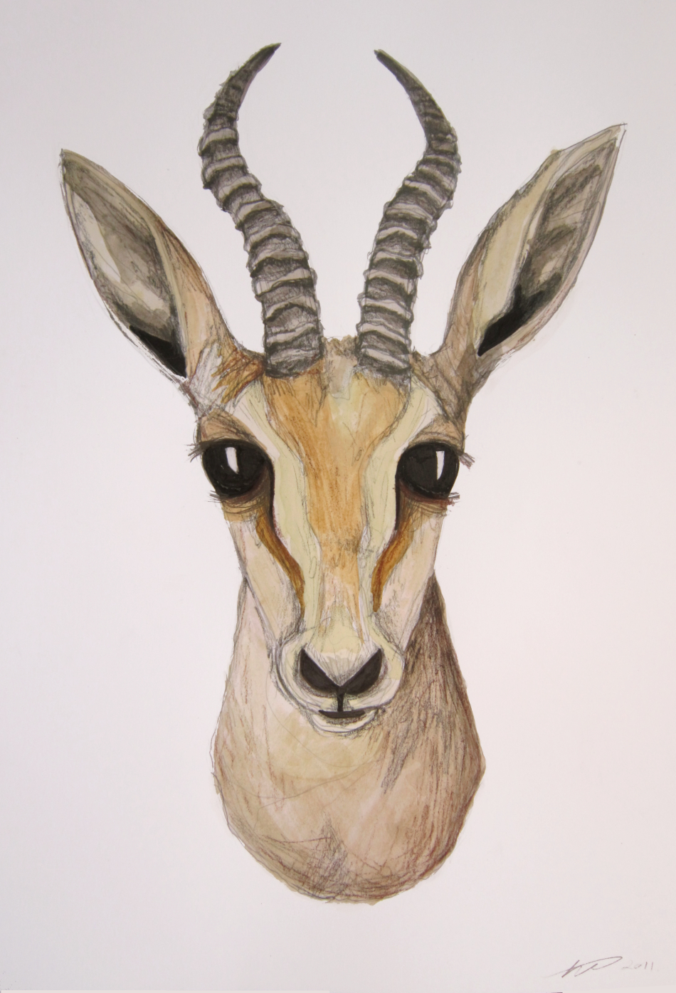Gazelle head drawing - photo#1