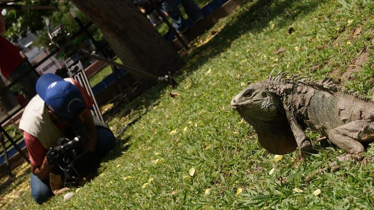 Parque de las iguanas, La Dorada, Caldas