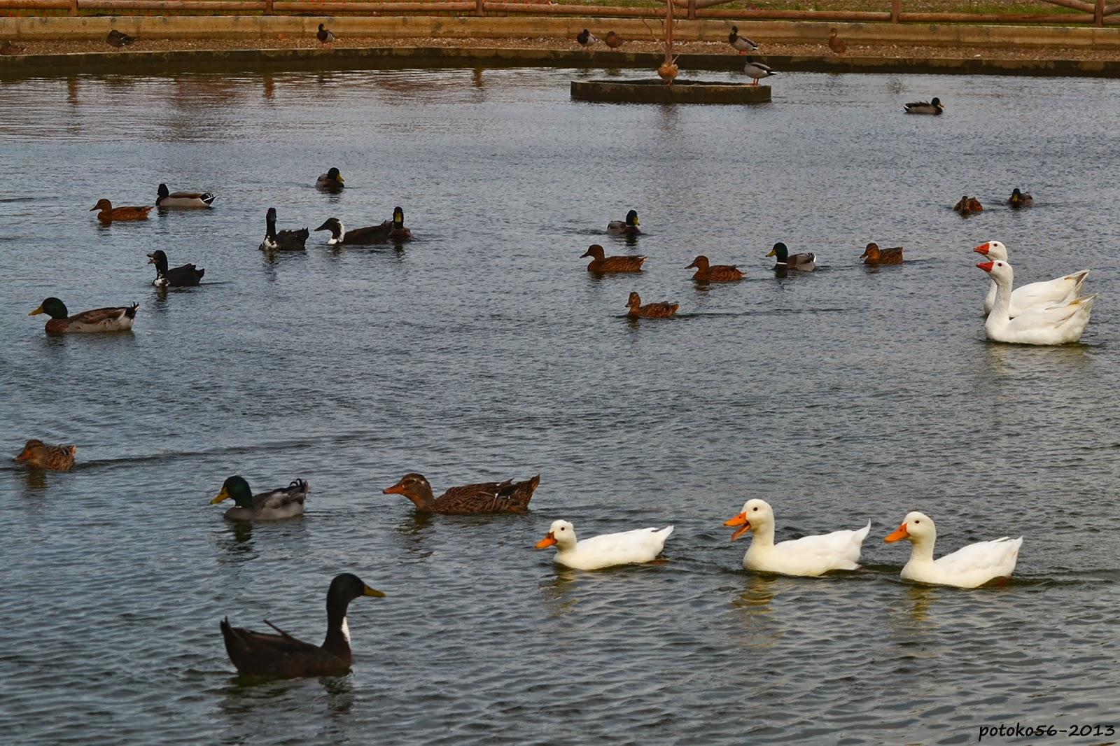 Parque Laguna del Moral Rota