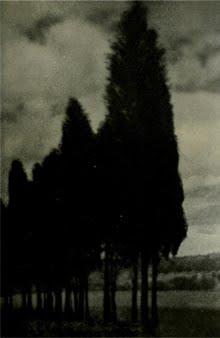 Cipreses negros