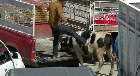 El mercado de animales más cruel del mundo