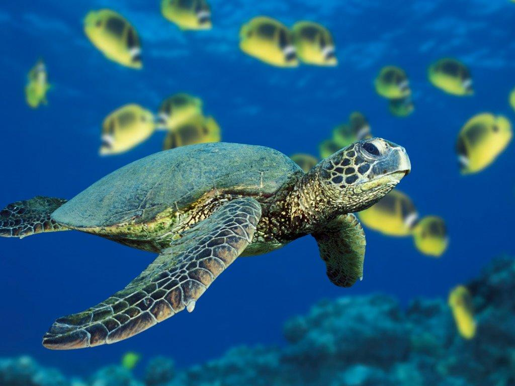 http://2.bp.blogspot.com/-Z9BCnrhqWm0/TfpdG0ixbrI/AAAAAAAAAkI/mAftB_2Vqro/s1600/turtle%2Bscreen%2Bimage.jpg