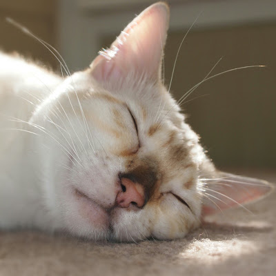 The Cats Are Forcing Me To Take A Cat Nap!
