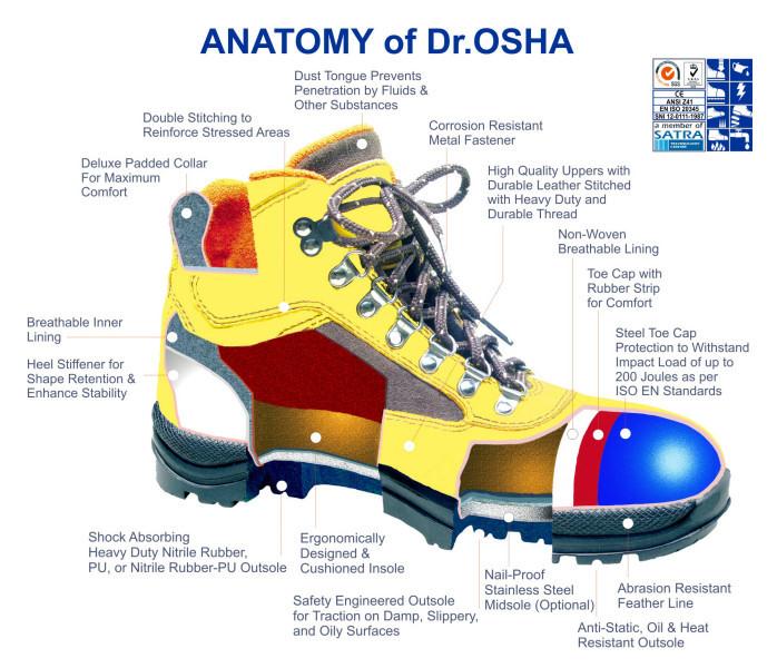 Anatomy Of Drosha Safety K3