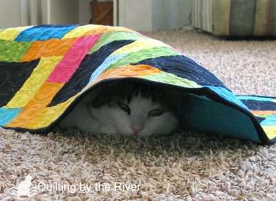 Cat under a quilt