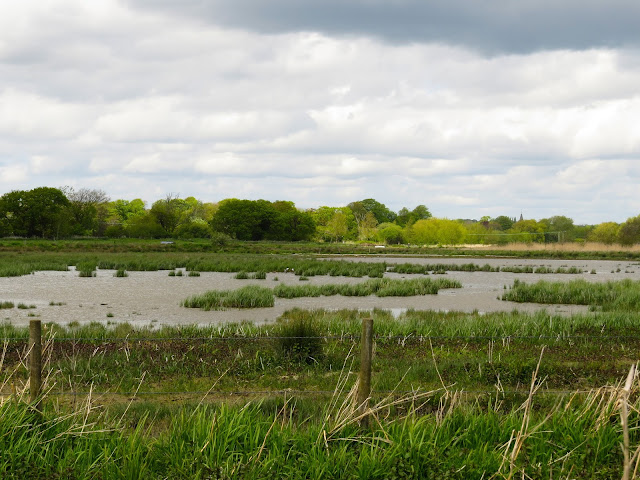 Posbrook Flood, Titchfield Haven