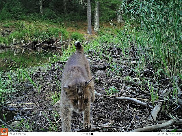 Quabbin / Central MA Cameras SLR & Trail Cameras