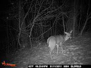 Deer in the headlights!