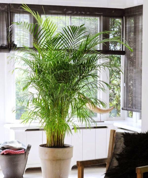 Mistylo by cris plantas de interior para tu hogar for Palmeras de interior