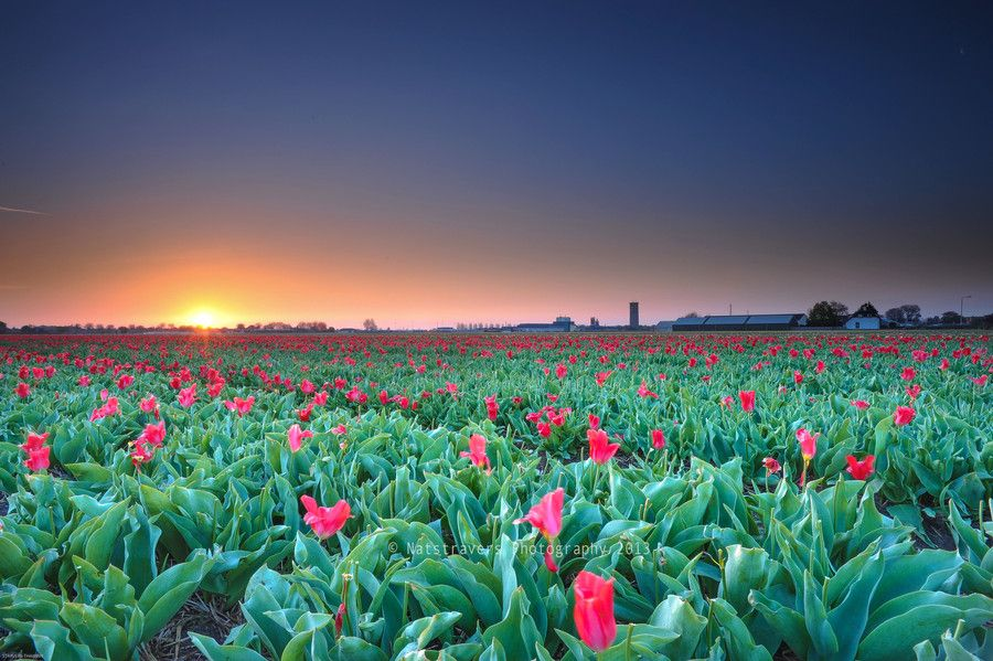 18. Sunrise at Lisse 4th of May 2013 by Nathalie Stravers