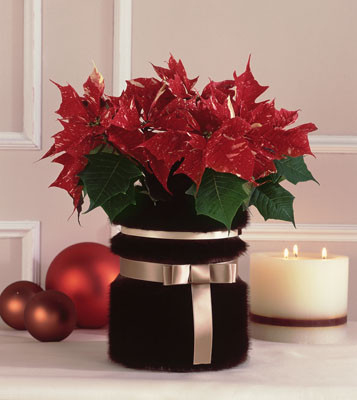 C mo decorar tu mesa de centro en navidad decorando mejor - Como decorar centros de mesa para navidad ...