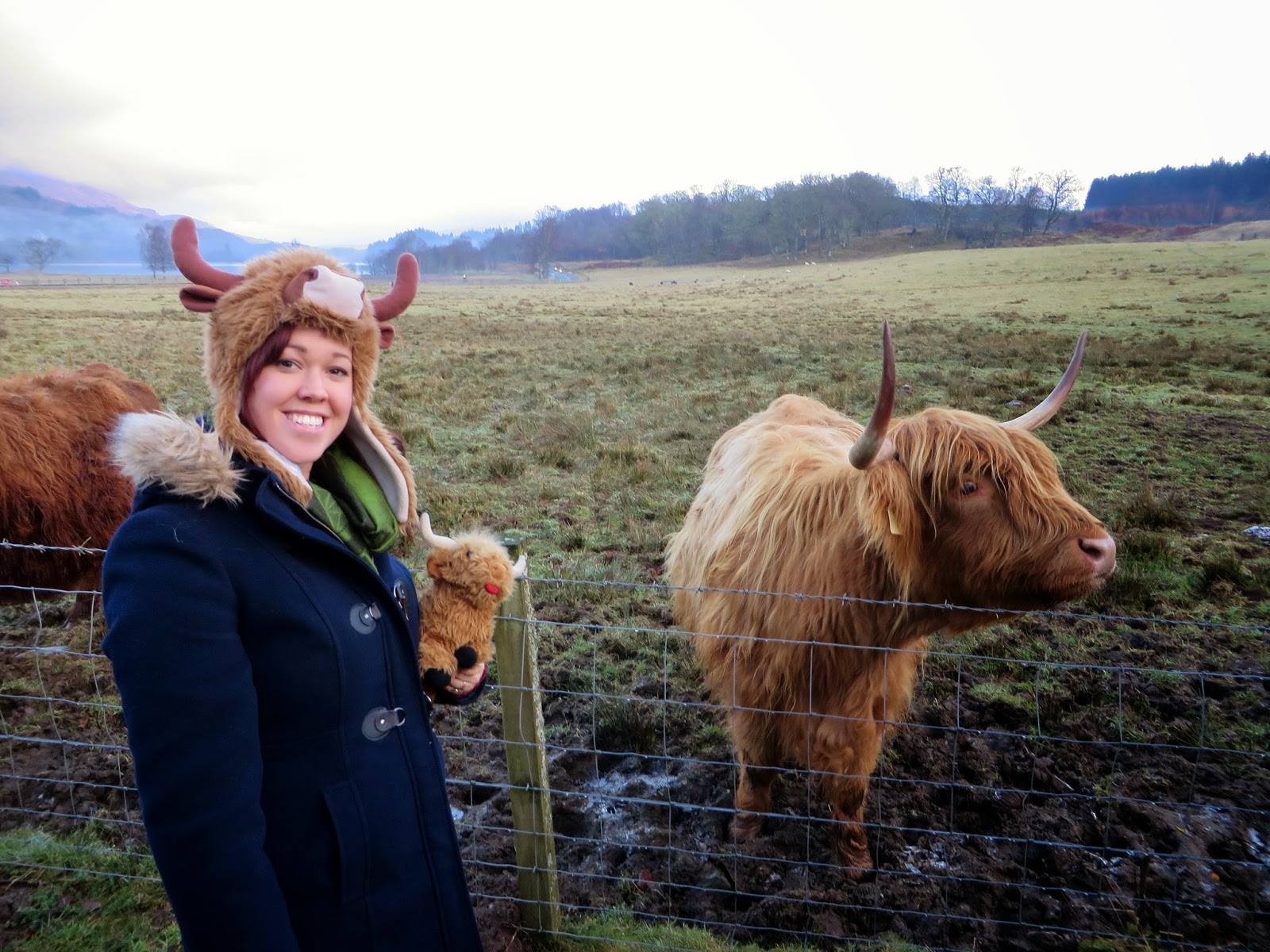"erin's ever after: the hairy coo ""free"" tour 