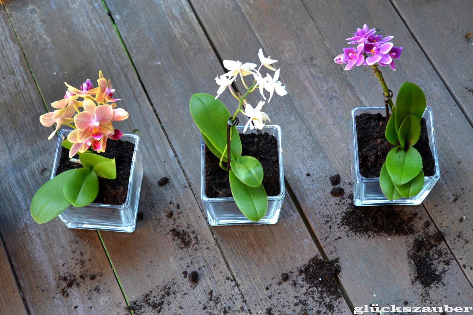 gl ckszauber bepflanzte geschenke f r meine mama orchideen und sukkulenten in einer. Black Bedroom Furniture Sets. Home Design Ideas