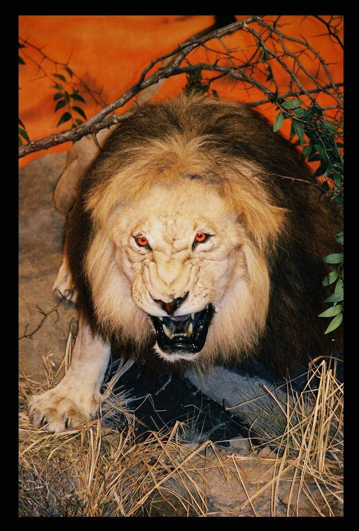 Как сделать льва на фото