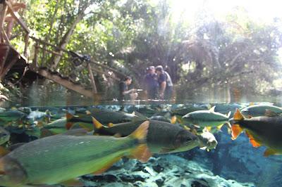 Inicio da flutuação no Aquário Natural