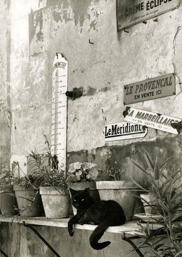 paris chat photos noir et blanc