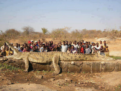 unbelievable, strange, africa, niger river, crocodile, animals