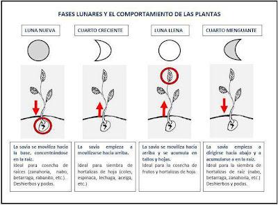 Tahu septiembre 2012 for Fases de la luna hoy