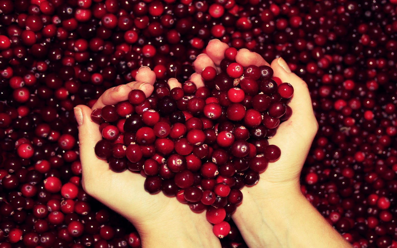 http://2.bp.blogspot.com/-ZCdRRT_w8i4/T-H_XXSAjRI/AAAAAAAAAeQ/jSz788lV4Ss/s1600/Cranberries%20Heart%20Love%20Wallpaper.jpg