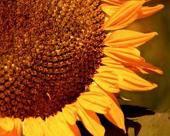 Floral Album