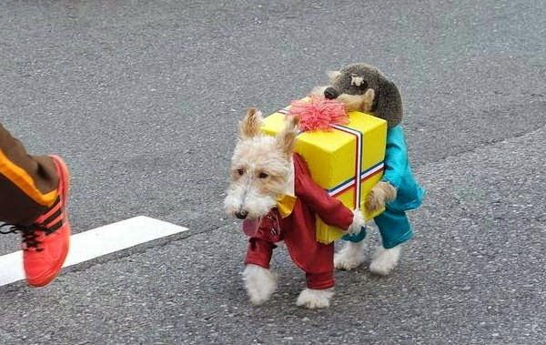 Funny dog outfit two dogs holding a present