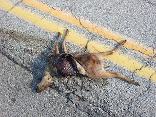 Korean roadkill