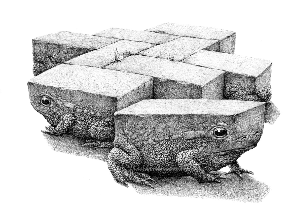 09-Frog-Stone-Redmer-Hoekstra-Drawing-Fantastic-and-Surreal-World-of-Hoekstra-www-designstack-co