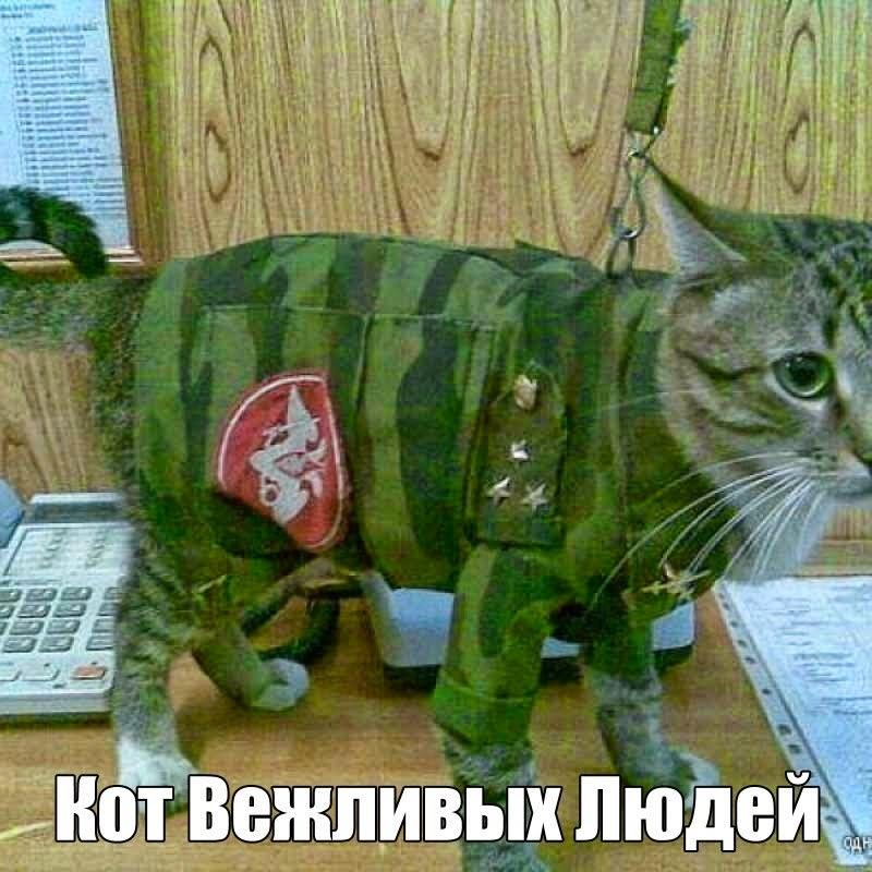 Вежливый кот 3