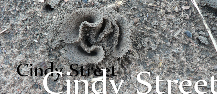 Cindy Street