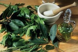 herbs NOT drugs