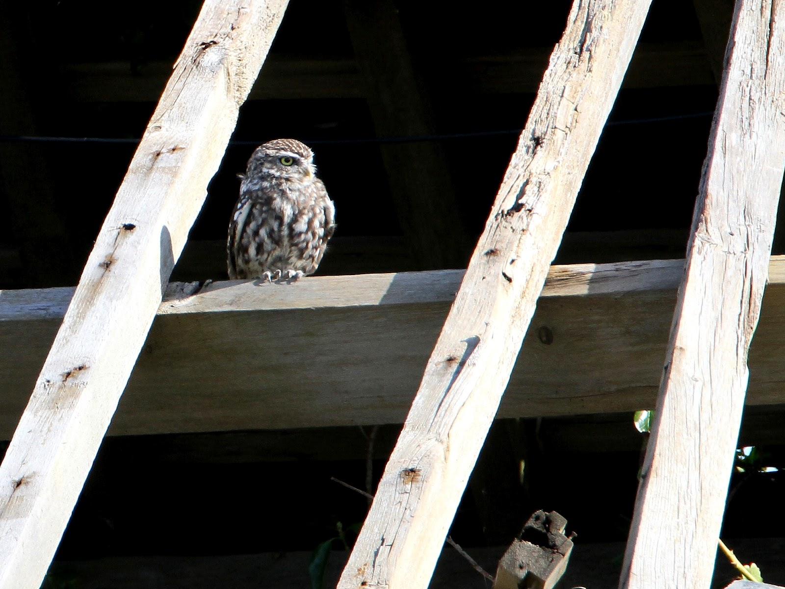 Birders in Boxers: An average day's birdin' until.........