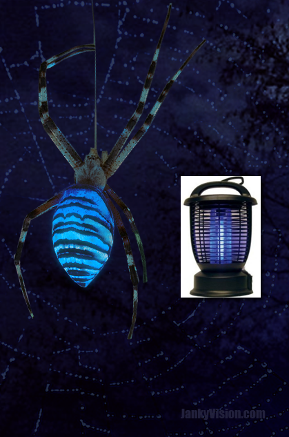 bug zapper spider attracts prey with bio luminescence. Black Bedroom Furniture Sets. Home Design Ideas