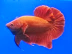 Betta Sales Blog