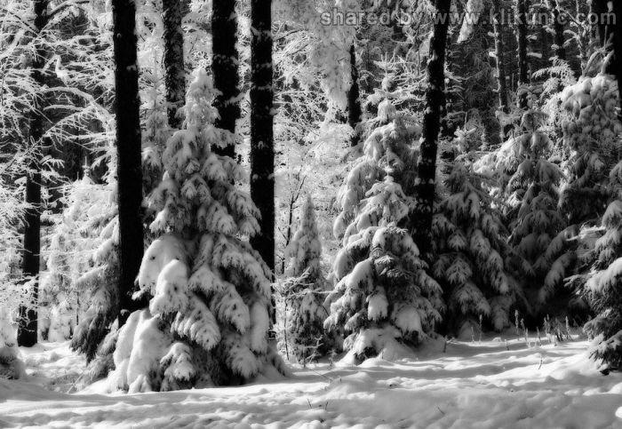 http://2.bp.blogspot.com/-ZEw_CaFwfPI/TXLflyDaIkI/AAAAAAAAP6k/st5Mfhl5oPY/s1600/winter_08.jpg