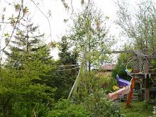 Backyard, Spring, 2013
