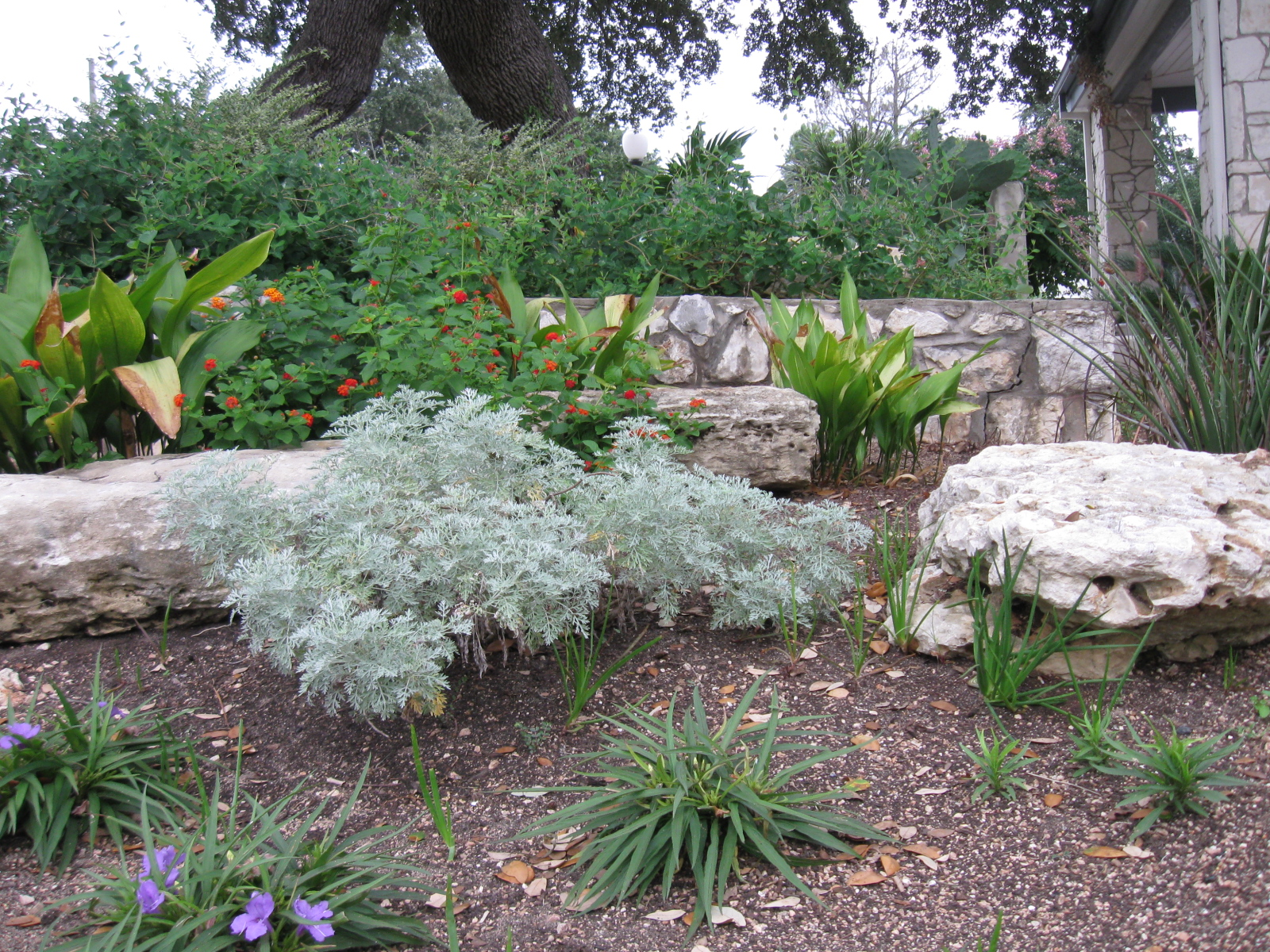 A Garden In Castroville, Texas. The Open Space Between The Plants Will Take  Less Water. Itu0027s Not A Houston, Texas Look, Is It? Will Our Houston Azaleas  And ...