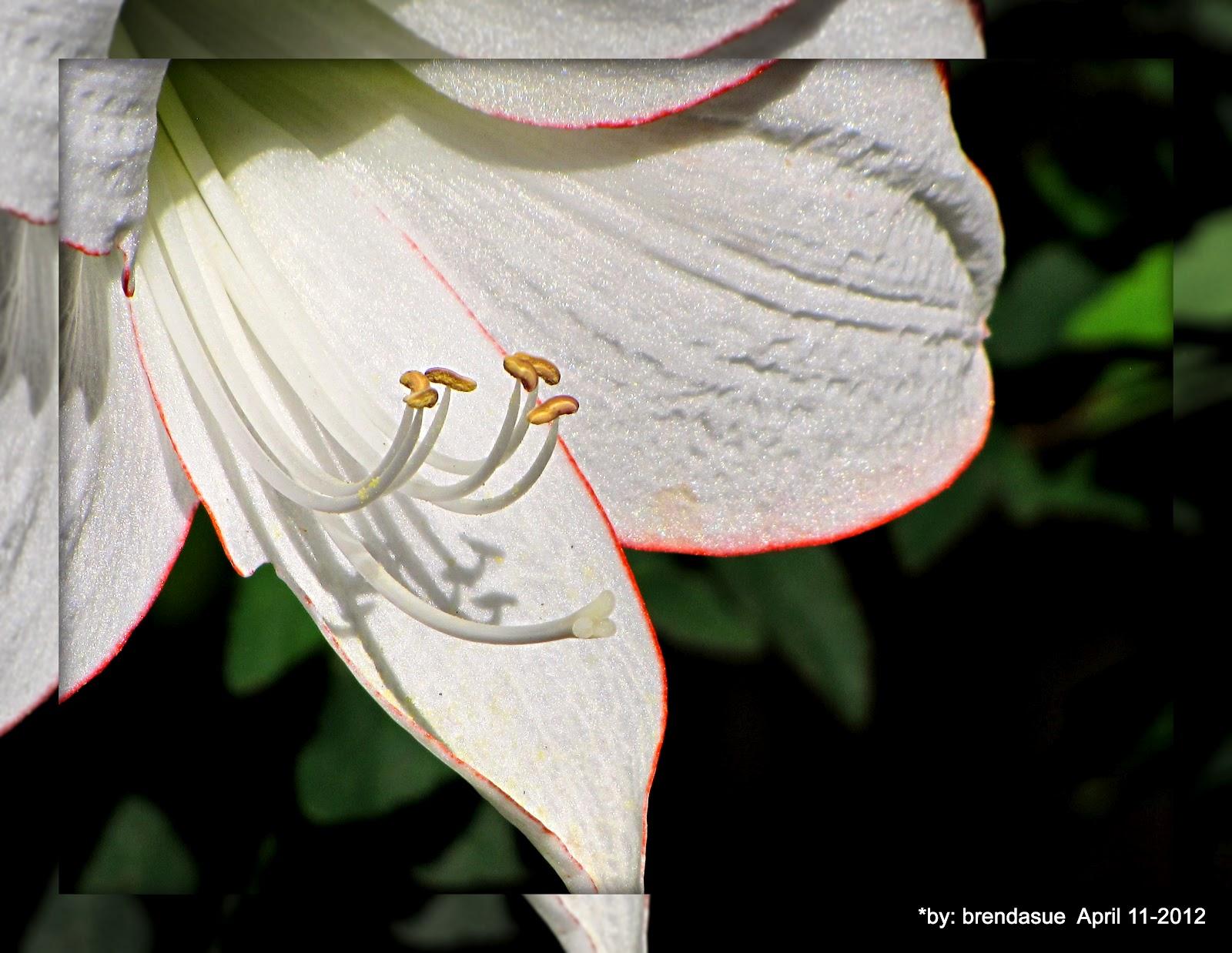 http://2.bp.blogspot.com/-ZFASFFnZyi4/T4ZdkPIbTtI/AAAAAAAATYw/9GkXGaw_ycc/s1600/399-001.JPG