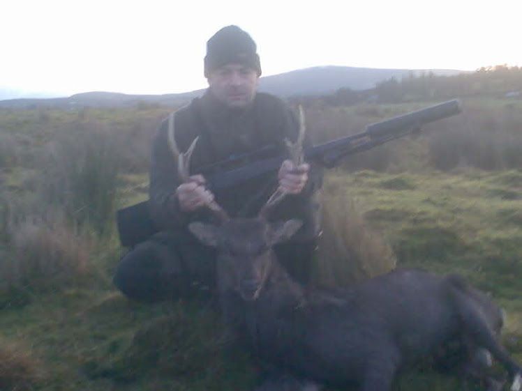 Trophy class Sika stag