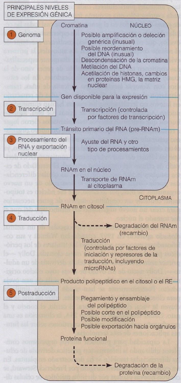 Apuntes de Bioquímica: abril 2014