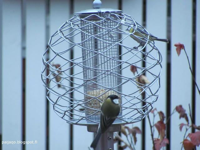 linnut telineessä