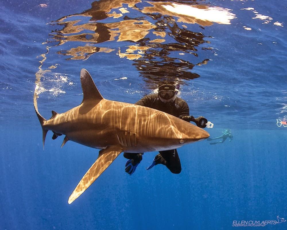 Shark Attacks Of 2013