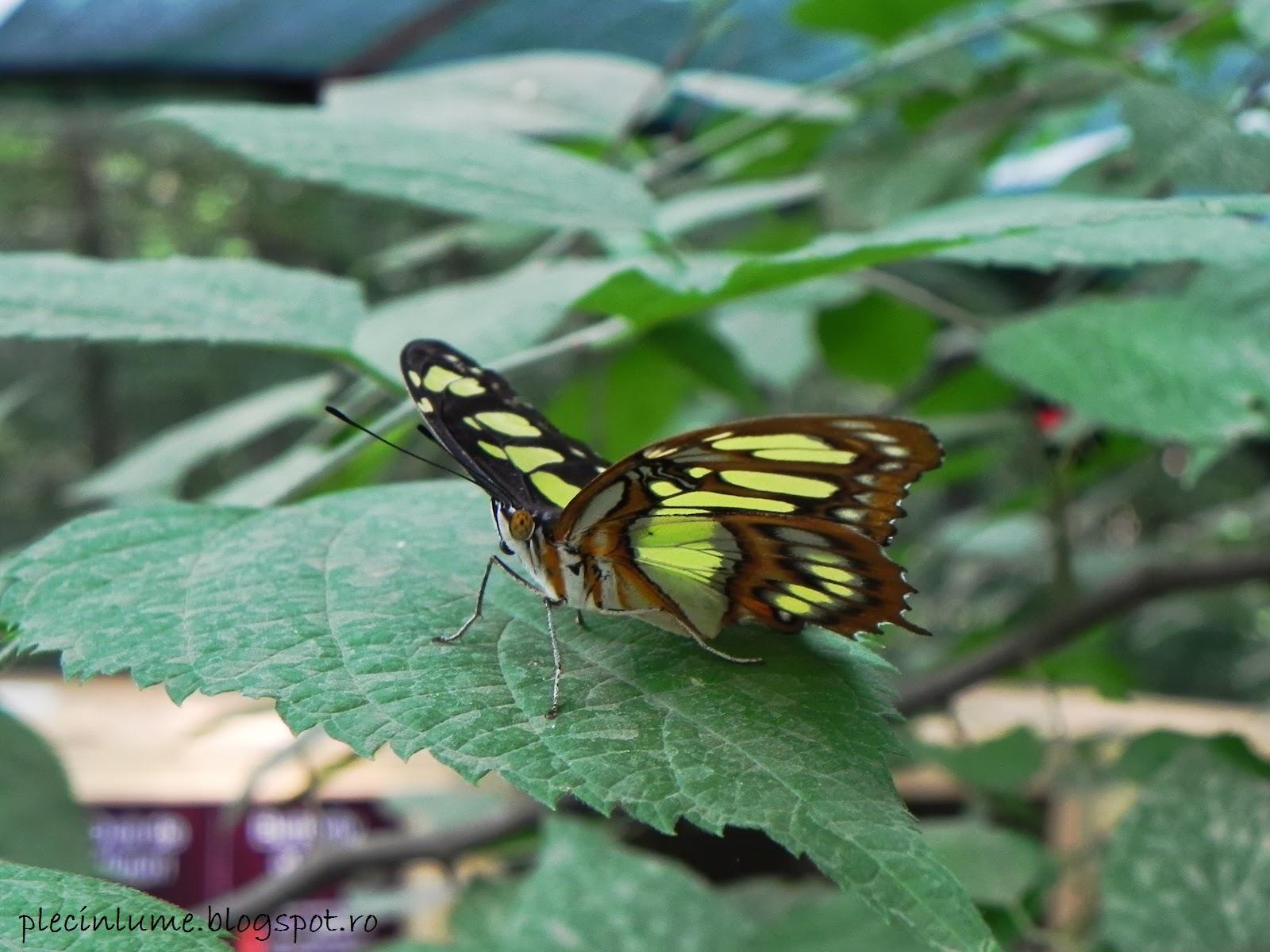 Fluture surprins